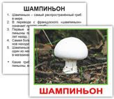 mushrooms_rus_03_2
