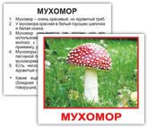 mushrooms_rus_04_2